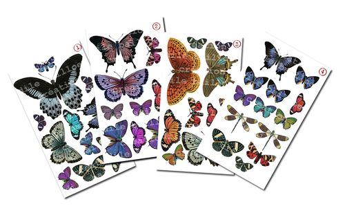 Nouveauté papillons