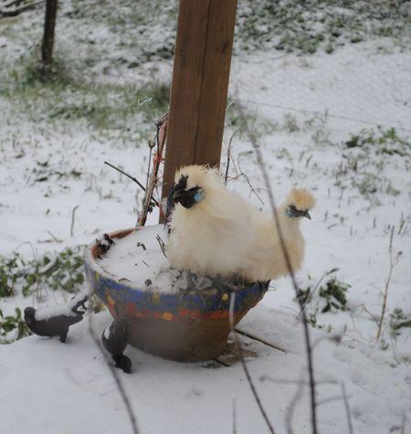 Mini poules au pot