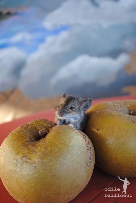 Souris et pommes