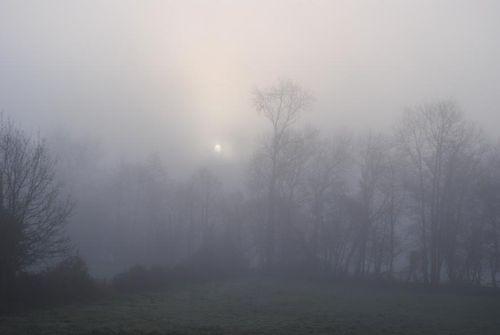 Mini brouillard