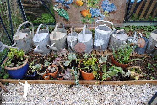 Mini plantes 1