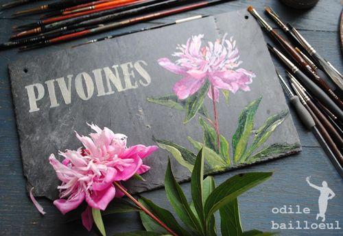 Mini pivoines 2
